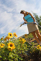 A young woman works in the community gardens of Jackson, Wyoming.