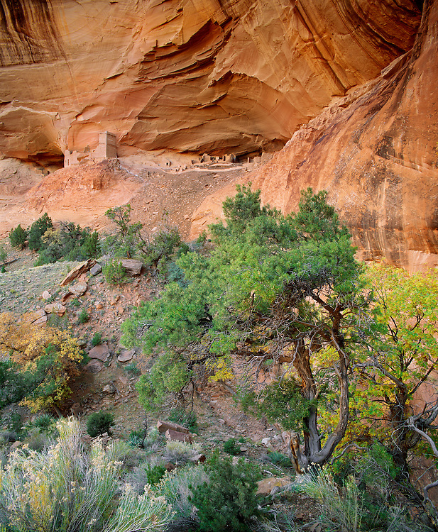 0100-1007 ~ George H. H. Huey ~ Anasazi ruins in Mummy Cave, Canyon del Muerto, with pinyon pines and gambel oaks. Canyon de Chelly National Monument, Arizona.