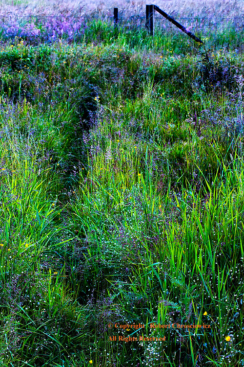 Tall Grass Path: A country pathway is overgrown with flowers and tall grass in Campbell Valley Park, Langley, British Columbia Canada.
