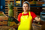 Pineapple factory worker holds up an inspected pineapple ready for shipping to the USA. The factory is located in La Virgen de Sarapiqui in Costa Rica.