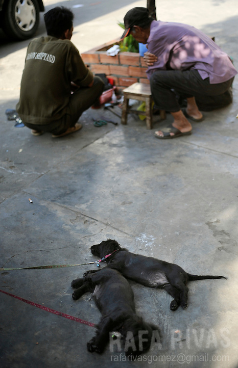 Two puppies relax next to two men in a street of Saigon, Vietnam, on January 2009.