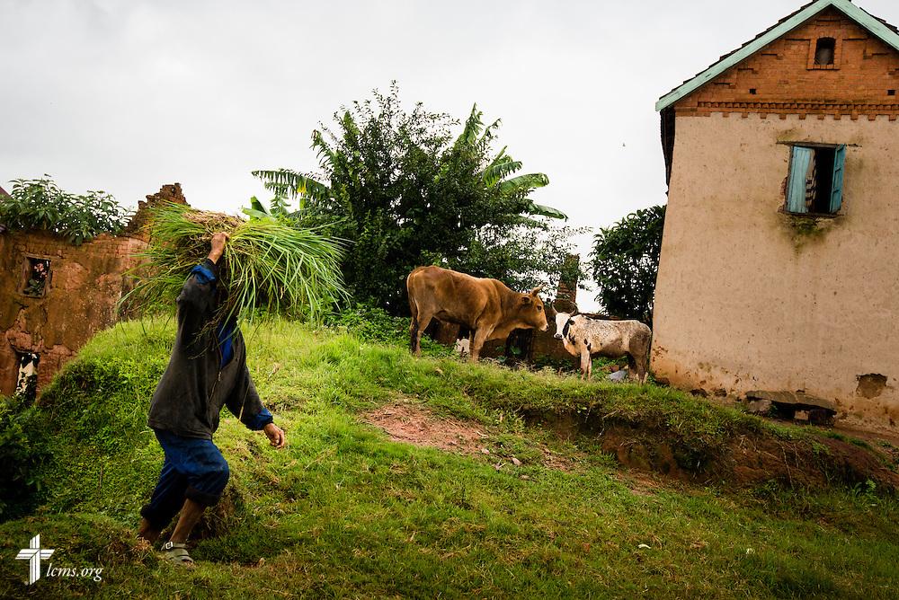 A man carries a crop near Antsirabe, Madagascar, on Wednesday, Feb. 5, 2014.  LCMS Communications/Erik M. Lunsford