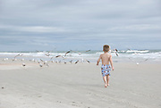 A young boy runs toward a flock of gulls at the beach.