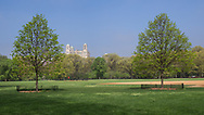 Young Linden trees on the Great Lawn in Central Park with a view of the Beresford apartment building.