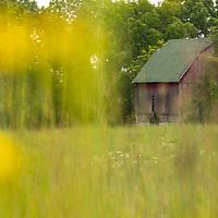 Abandoned barn through prairie flowers