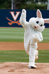 The Easter Bunny threw out the opening pitch before a Easter Sunday baseball game between UVA and Duke. The Virginia Cavaliers Baseball team defeated the Duke Blue Devils 8-1 in the final game of a three game series at Davenport Field in Charlottesville, VA on April 8, 2007. The win secured a 2-1 series victory over the Blue Devils.