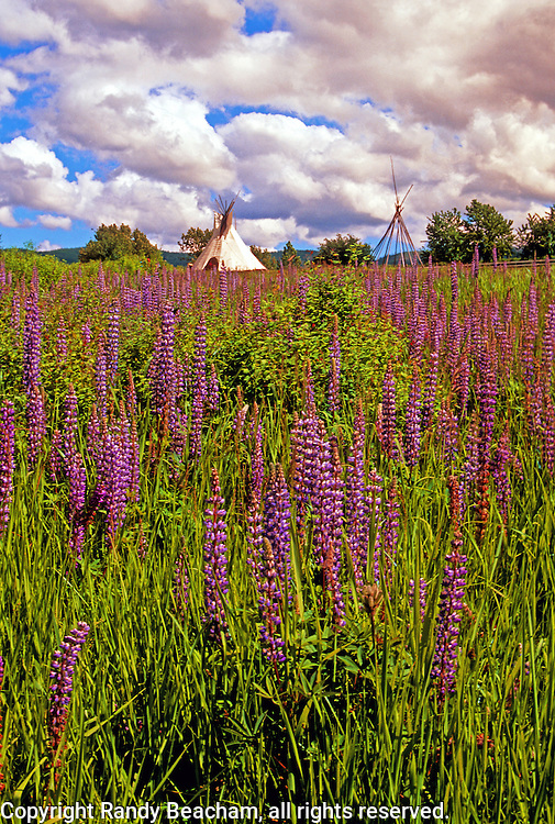 Lupines and tipis, Cataldo Mission State Park, North Idaho.