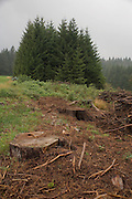 cleared patch of land Black Forest Germany