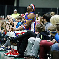 "Thomas Wells | Buy at PHOTOS.DJOURNAL.COM<br /> ""Hi-Lite"" finds a seat on a fans lap during their game Tuesday night against the All-Stars at the BancorpSouth Arena in Tupelo."