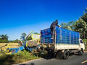 "08 DECEMBER 2015 - KO WAI, NAKHON NAYOK, THAILAND:  Rice is moved from a harvesting machine to a truck during the rice harvest in Nakhon Nayok province, about two hours north of Bangkok. Thai agricultural officials expect rice prices to go up by as much as 15% as global production of rice is cut by the Pacific Ocean El Niño weather pattern. Thailand's rice production is expected to drop in the coming year. Persistent drought has reduced the main crop, currently being harvested, and the military government has ordered farmers not to plant a second crop of ""dry season"" rice to conserve Thailand's dwindling supply of water. Thailand's water reservoirs are at their lowest seasonal levels in recent memory and little rain is expected during the dry season, which lasts until June.   PHOTO BY JACK KURTZ"