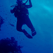 Diving in palancar reef,Cozumel.