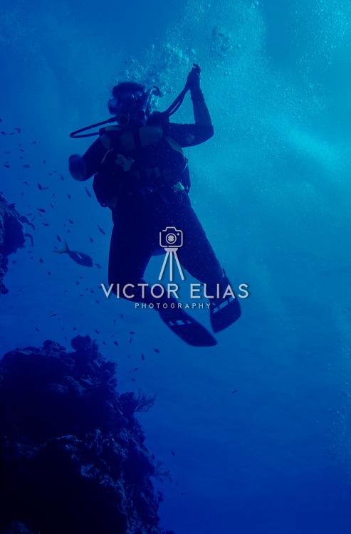 Diving in palancar reef,Cozumel.