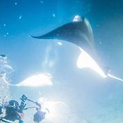 Scuba diving off Kona, Big Island, Hawaii. © William Drumm, 2013.