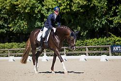 Franckx Tom, BEL, Quanto Curo vh Bloemenhof<br /> Final selection WK Young Horses<br /> © Hippo Foto - Sharon Vandeput<br /> 29/06/19