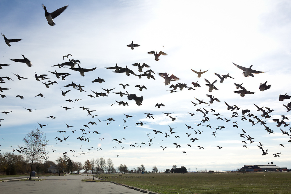A flock of geese takes off from Miller Field, one site from which aid agencies dispensed household supplies and food to storm-affected residents and insurance groups received damage claims.