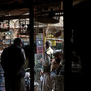 November 15, 2012 - Kabul, Afghanistan: Local merchants at the birds bazaar in central Kabul. (Paulo Nunes dos Santos)
