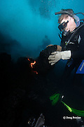 diver Bud Turpin shapes erupting pillow lava by hand <br /> to form underwater lava sculptures at Kilauea Volcano, Hawaii Island (&quot; the Big Island &quot;), Hawaii, U.S.A. ( Central Pacific Ocean ) MR 348