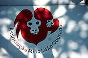 Die ortsansässige Organisation Associação Mico-Leão-Dourado führt das Programm zur Wiedereinführung und zur wissenschaftlichen Untersuchung des Goldgelben Löwenäffchens im Poço das Antas Reserve durch. | The local organization Associação Mico-Leão-Dourado runs the research and reintroduction program for the Golden Lion Tamarin in the Poço das Antas Reserve.