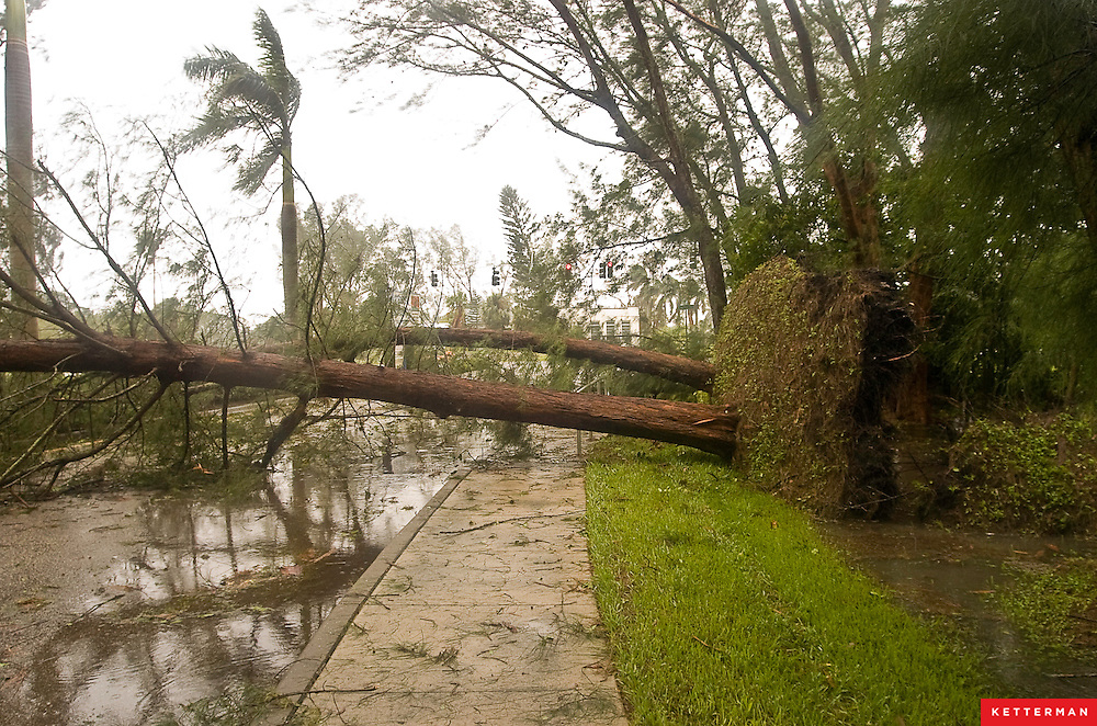 The combination of oversaturated soil and high winds make fallen trees a big problem during hurricanes and tropical storms.