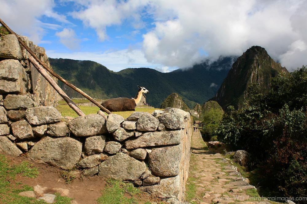 South America, Peru, Machu Picchu. Llama and Inca Trail.