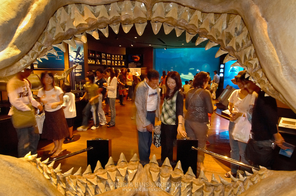 "JPN, Japan: Okinawa Churaumi Aquarium, Blick durch ein Haigebiss in den Raum ""Shark Research Lab"" in dem der Besucher alles über diese Raubtiere erfahren kann, Ocean Expa Park, Okinawa, Okinawa 