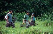 Mitglieder der Organisation Associação Mico-Leão-Dourado tragen Fallen in den Regenwald des Poço das Antas Reserve, um ganze Gruppen der beobachteten Goldgelben Löwenäffchen einzufangen. | Members of the Associação Mico-Leão-Dourado carry traps into the rainforest of the Poço das Antas Reserve to catch whole groups of the monitored Golden Lion Tamarins.