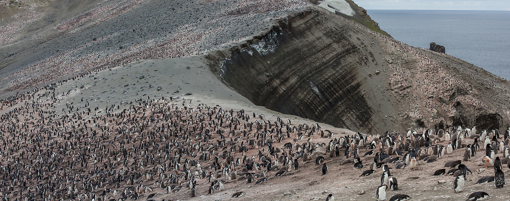 Chinstrap Penguins, Baily Head on Deception Island, Antarctica 2014