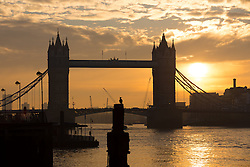 © Licensed to London News Pictures. 17/01/2017. LONDON, UK.  A cormorant sits on a post during sunrise behind Tower Bridge in London this morning during cold weather. Following a spell of milder weather yesterday, temperatures fell again in London last night. Photo credit: Vickie Flores/LNP