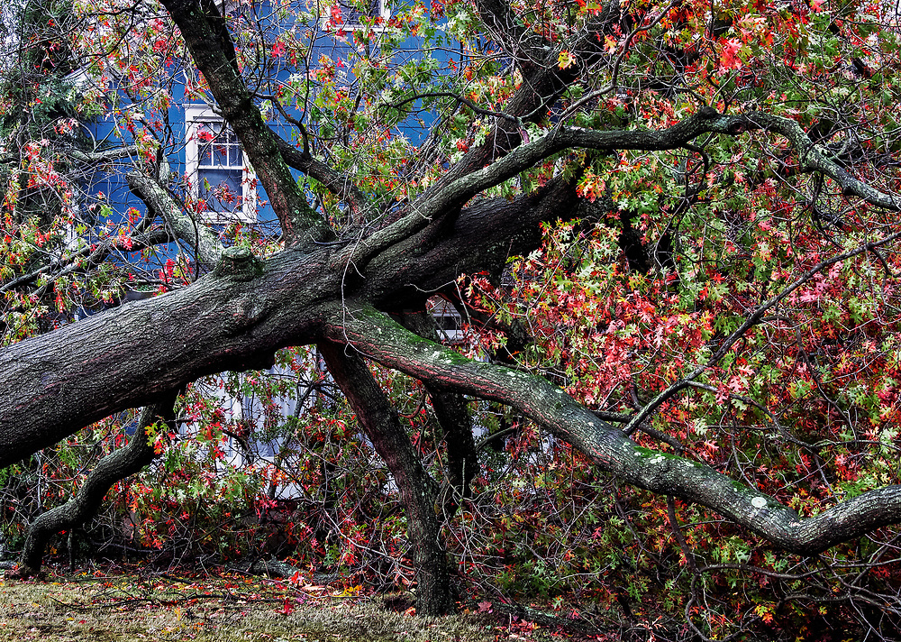 Hurricane Sandy tree damage, New Jersey, USA