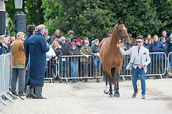 Hobday Ben, (GBR), Mulrys Error<br /> First Horse Inspection - Mitsubishi Motors Badminton Horse Trials <br /> Badminton 2015