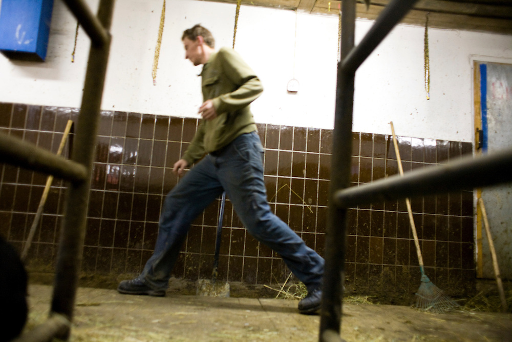 Valera, a former drug user who is now in a rehabilitation program run by the orthodox church, prepares to milk a cow at the organization's live-in retreat in Sapernoe, Russia, on Saturday, September 15, 2007. About a dozen people at a time live and work at the remote farm, about two hours from St. Petersburg, for a free one year course of treatment.