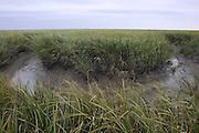 Bend in Saltmarsh Creek; Spartina alterniflora; NJ, Delaware Bay