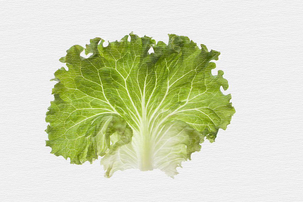 My love for textures led me to photograph some modern art food images as a contrast to my more rustic images. Set against a white background enhances the ruffled edges on this leaf of green lettuce