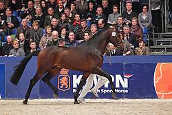 528 - C<br /> KWPN Hengstenkeuring 's Hertogenbosch 2010<br /> © Dirk Caremans