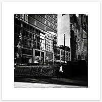 Martin Place, Sydney CBD. From the Ephemeral Sydney street series.<br /> <br /> Instagram: @GirtBySeaMono