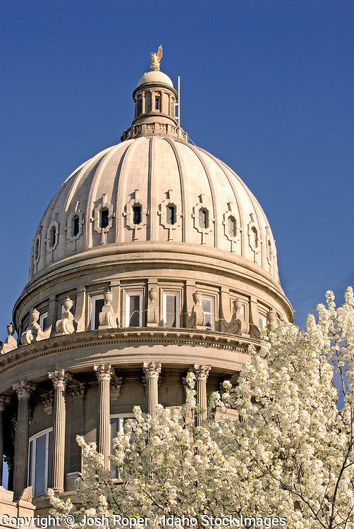 Idaho, Boise.  A beautiful spring morning greets The Capitol Building and a colorful tree in bloom in downtown.