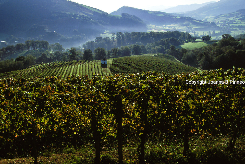 Cave d'Irouléguy, a family owned winery in the Basque country in France. Their origins start in the 13th century.