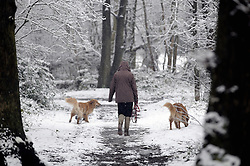 © Licensed to London News Pictures. 11/02/2013.The snow has returned today (11,02,2013) to Kent and the South East. Snow in Pettswood near Bromley in South East London. A woman walking her dogs in Pettswood woodland on Chislehurst Road..Photo credit : Grant Falvey/LNP