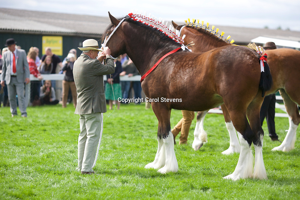 Mr &amp; Mrs F &amp; J Pickles' Bay Filly<br />