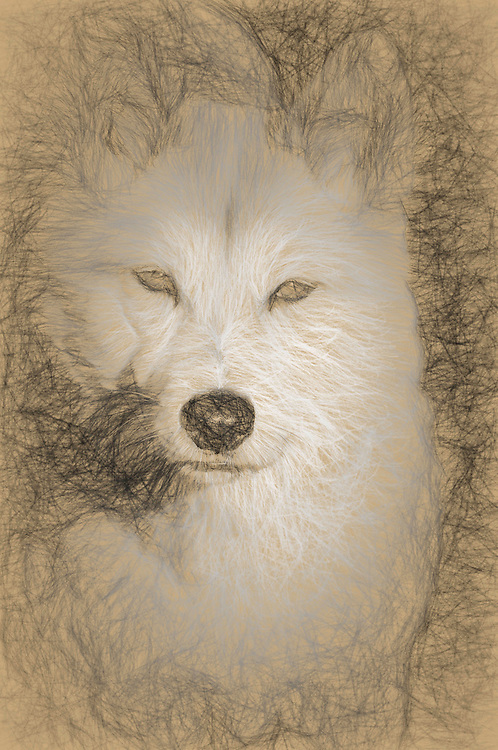 Painterly effects can be applied to all images. Various effects are possible, including those that emulate the style of Cezanne, Monet, Renoir, Van Gogh, Degas, Hopper, O'Keeffe, Turner, and others. This image shows an image in the style of a sketch by Da Vinci.