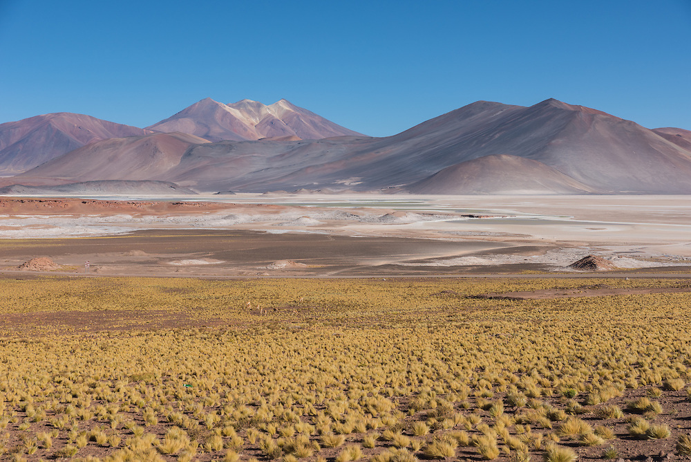 Grassy plains of Piedras Rojas, or Red Rocks, Altiplano, Chile.