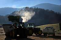 Steam rises from livetsock feed being loaded at the Mountain Research Station Haywood County.