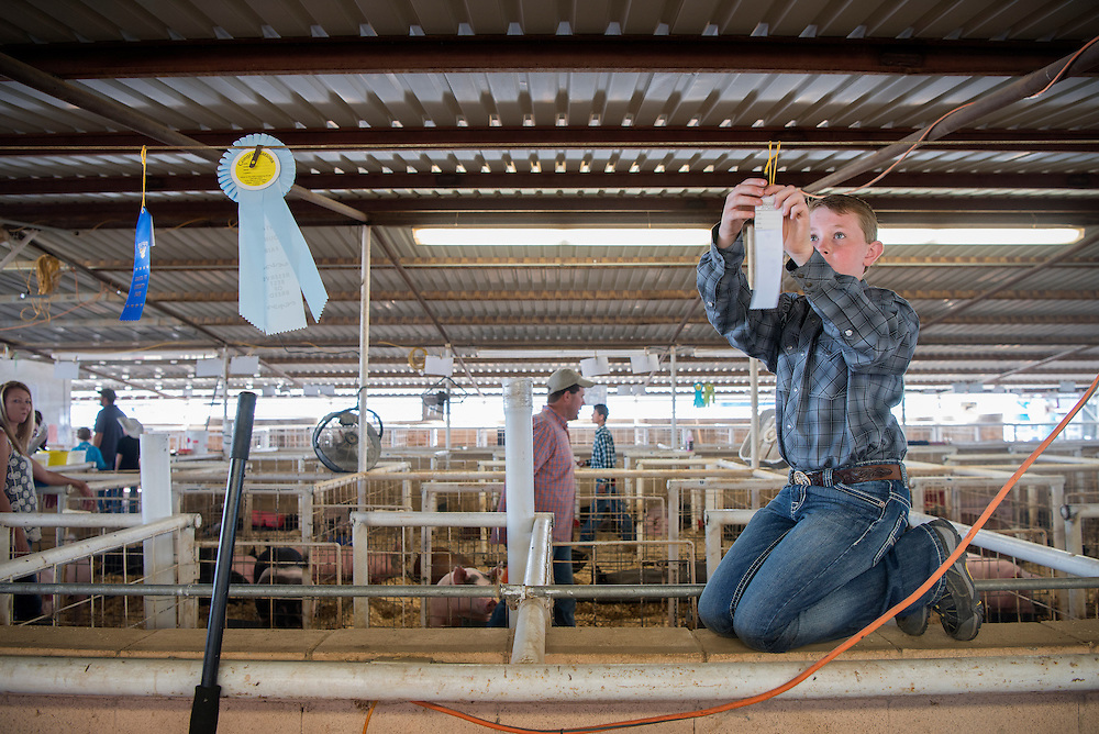 Wylie Schwebach, 11, from Moriarty, hangs up ribbons won by his younger brother Aiden, 9, in the swine show at the Santa Fe County Fair Thursday, Aug. 4, 2016. Both boys won ribbons in the event and Aiden won a reserve best of breed. The fair continues until Sunday at the Santa Fe County Fair Grounds. The events include live stock shows, indoor exhibits, music and more.   (Eddie Moore/Albuquerque Journal