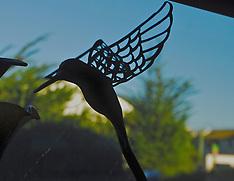 Hummingbird Stock Photography by Catherine Herrera Photography