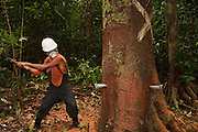 Sustainable Logging Operation using steel pegs for directional felling<br />