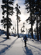 Snowshoe by trees, Snoqualmie Pass, Washington, USA