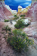 Calhan Paint Mines, eastern plains, wildflowers