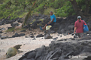 Hawaiian monk seal, Neomonachus schauinslandi,  ( formerly Monachus schauinslandi ), Critically Endangered, endemic species, 7 year old male, molting, reacts to intrusion by fisherman crossing beach by waking up and barking, Pawai Bay, near Kaiwi Point, Kona, Hawaii ( the Big Island )
