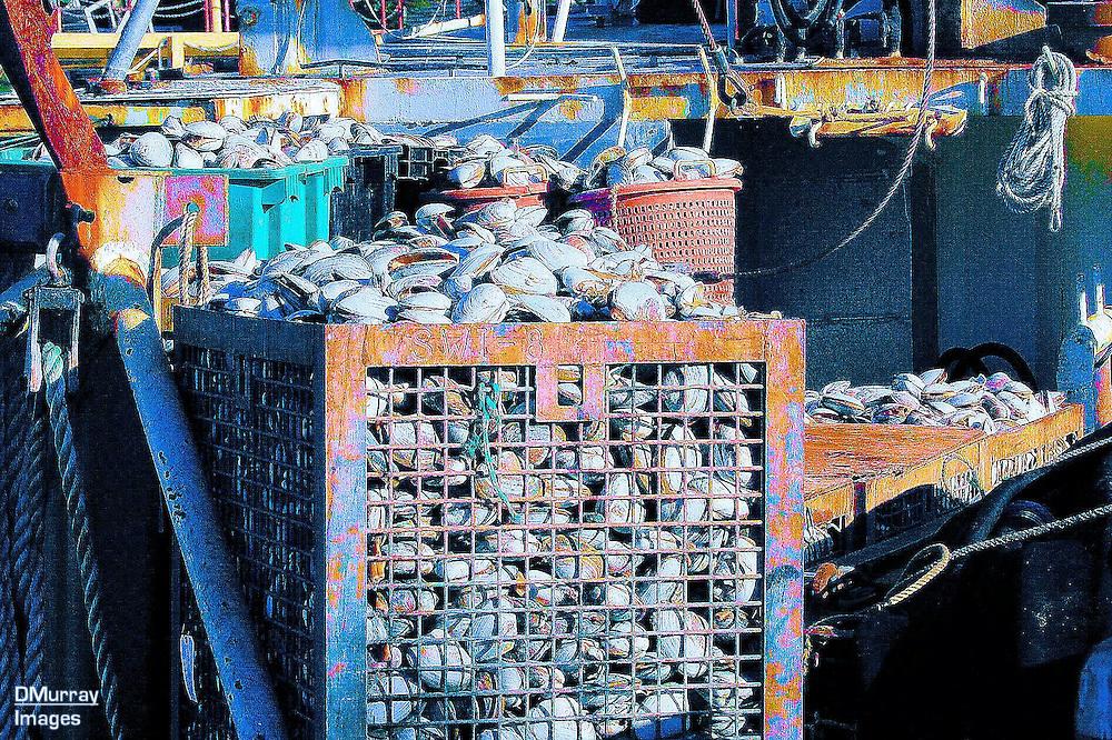 Fresh Catch Clams (Colorized), Hyannis, Cape Cod, Massachusetts