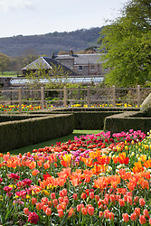 The tulip trial at Parham House and Gardens.